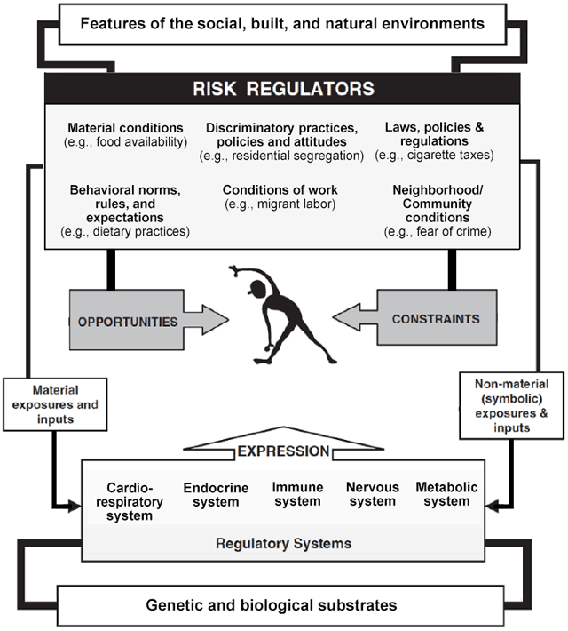 Illustration of Risk Regulators in Social and Biological Context